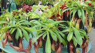 PLANTES 1